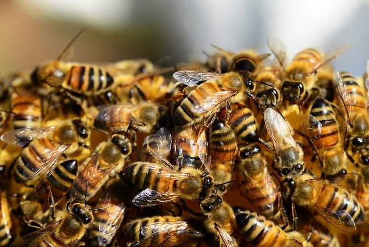 Pesticides of the new generation are dangerous for bees