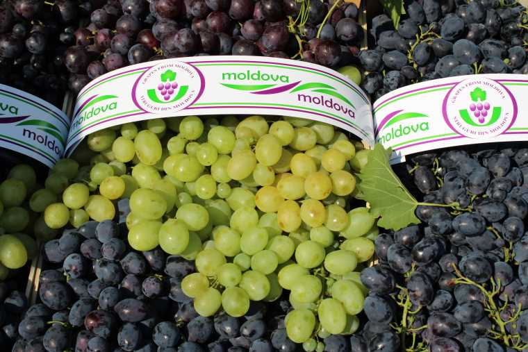 Moldovan grapes are in demand on the Polish market